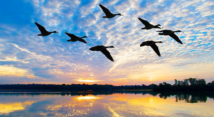 Flocking To Low Down Payment Programs